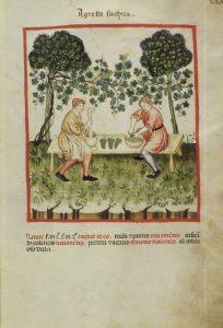 Ellucasim Elimittar Theatrum Sanitatis codice 4182. Agreste suchus per gentile concessione della Biblioteca Casanatense, Roma